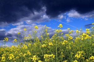 Güneşli memlekette parçalı bulutlu hayatlar